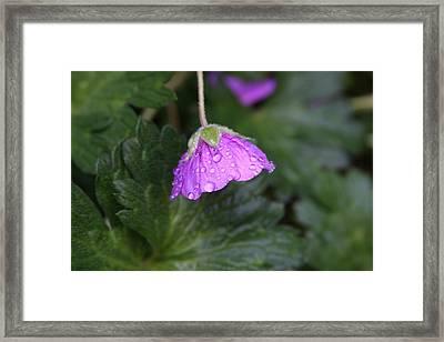 Rain Kissed Framed Print by Lynn-Marie Gildersleeve