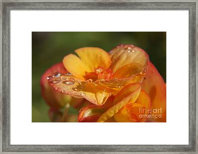 Rain Magic Framed Print