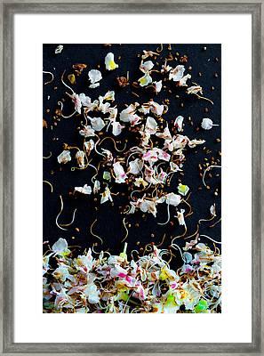 Rain Of Petals Framed Print by Edgar Laureano