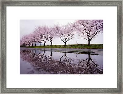 Rain Of Spring Framed Print by Kouji Tomihisa