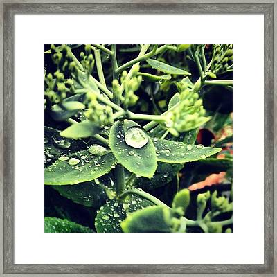 #rain On Moving Day. Grateful That Its Framed Print
