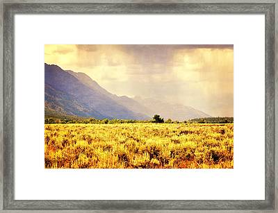 Rain On The Sagebrush Framed Print by Marty Koch