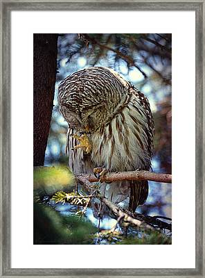 Rain Owl Framed Print