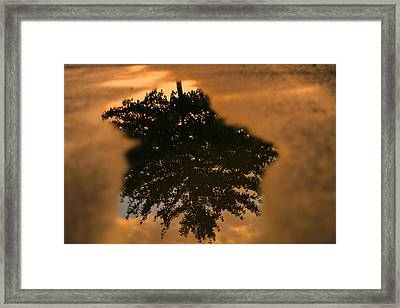 Rain Puddle Reflection At Sunset Framed Print by Dan Sproul