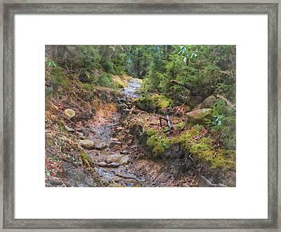 Rain Ruts Along The Appalachian Trail Framed Print