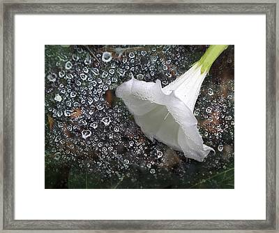 Rain Soaked Framed Print