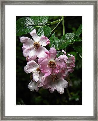 Rain Soaked Rose Framed Print