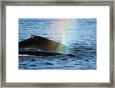 Rainblow Framed Print by Deana Glenz