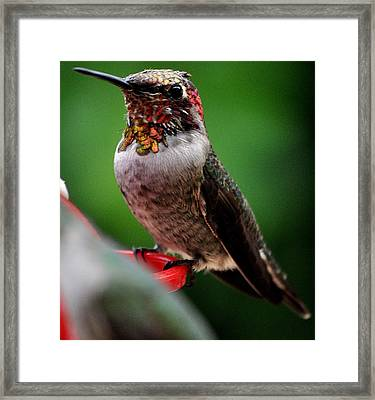 Framed Print featuring the photograph Rainbow Colored Male Anna by Jay Milo