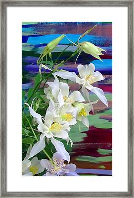 Rainbow Columbine Framed Print by Brenda Pressnall