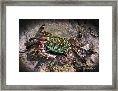 Rainbow Crab Framed Print by Mariola Bitner