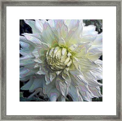 Rainbow Dahlia Framed Print