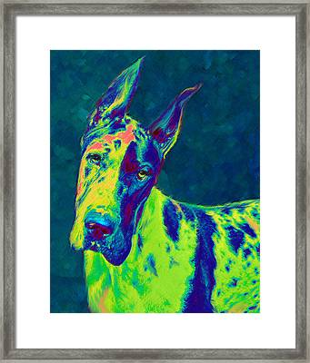 Rainbow Dane Framed Print by Jane Schnetlage
