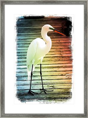 Rainbow Egret On Pier - Digital Art Framed Print by Carol Groenen