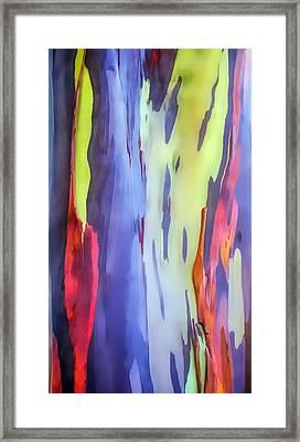Rainbow Eucalyptus 2 Framed Print