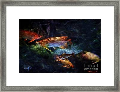 Rainbow Exotic Fish Framed Print by Jani Bryson