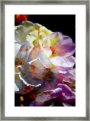 Rainbow Floral Framed Print by John Fish