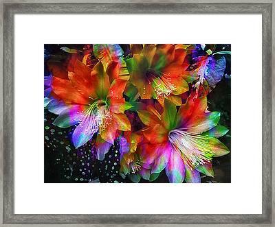 Rainbow Flowers Framed Print by Daniel Hagerman