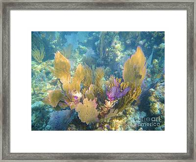 Rainbow Forest Framed Print