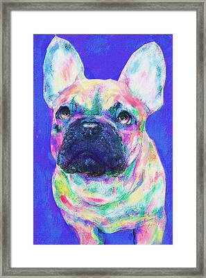 Framed Print featuring the digital art Rainbow French Bulldog by Jane Schnetlage