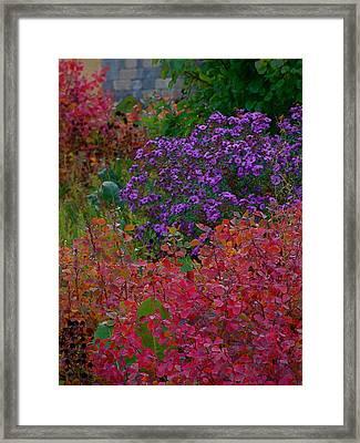 Rainbow Garden Framed Print by Tim Good
