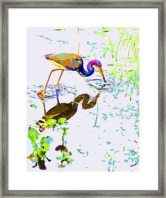 Rainbow Heron Framed Print by Norman Johnson