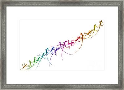 Rainbow Lizard Framed Print by Tim Gainey