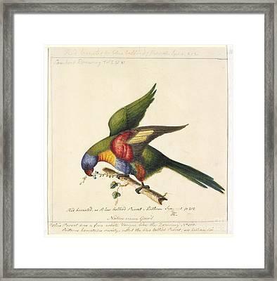 Rainbow Lorikeet, 18th Century Framed Print by Natural History Museum, London