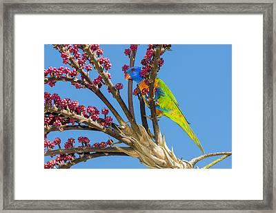 Rainbow Lorikeet In Queensland Umbrella Framed Print by D. Parer & E. Parer-Cook