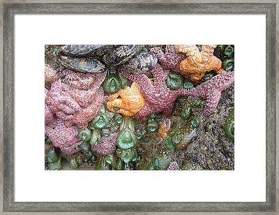 Rainbow Of Sea Creatures Framed Print by Karen Molenaar Terrell
