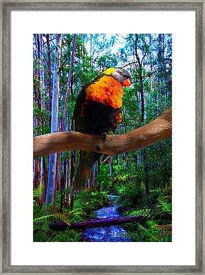 Rainbow Of The Forest Framed Print