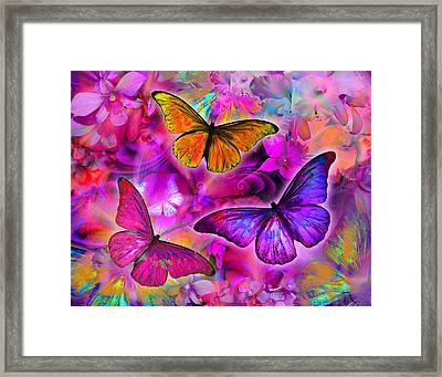 Rainbow Orchid Morpheus Framed Print by Alixandra Mullins