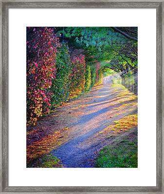 Rainbow Path Framed Print by William Schmid