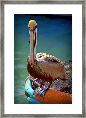 Rainbow Pelican Framed Print by Karen Wiles