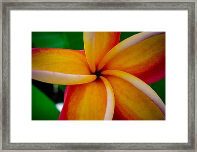 Framed Print featuring the photograph Rainbow Plumeria by TK Goforth