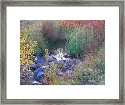 Rainbow Pond Framed Print by Bev Conover