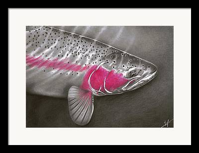 Fly Fishing Drawings Framed Prints