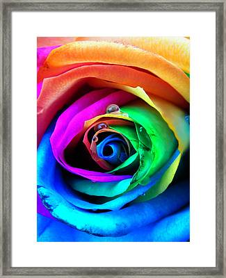 Rainbow Rose Framed Print