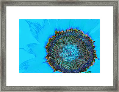 Rainbow Sunflower Framed Print