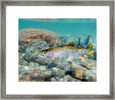 Rainbow Trout And Green Ghost Framed Print