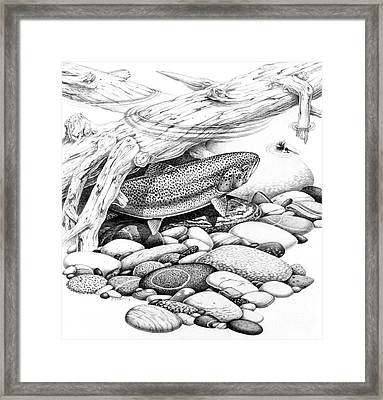 Rainbow Trout Pencil Study Framed Print