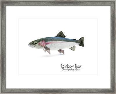Rainbow Trout Portrait Framed Print by Leone M Jennarelli