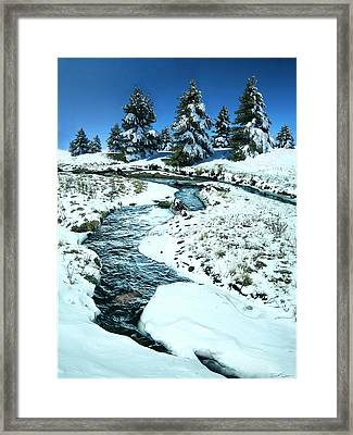 Rainbow Trout Framed Print by Ric Soulen