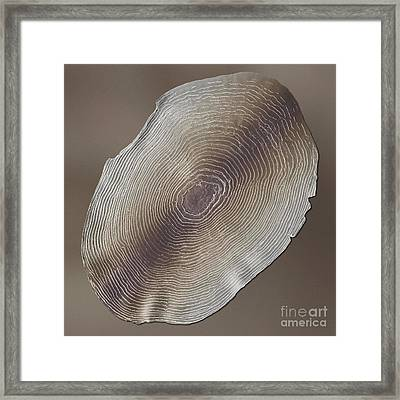 Rainbow Trout Scale, Sem Framed Print by Cheryl Power