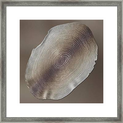 Rainbow Trout Scale, Sem Framed Print by Power And Syred