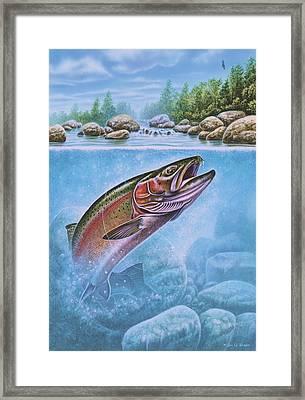 Rainbow Trout Split Level Framed Print by Jon Q Wright