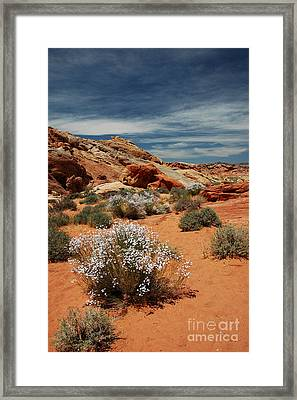 513p Rainbow Vista In The Valley Of Fire Framed Print by NightVisions