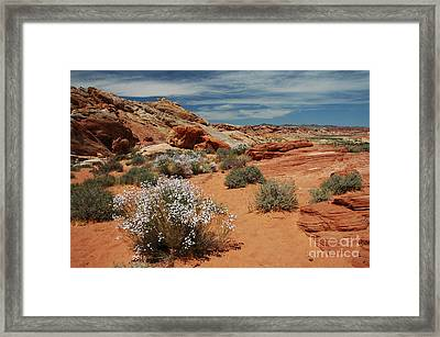 601p Rainbow Vista In The Valley Of Fire Framed Print by NightVisions