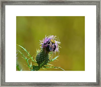 Rainbow Wings Framed Print by Mary Zeman