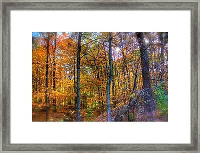 Rainbow Woods Framed Print